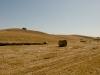 Høst ved Chianni